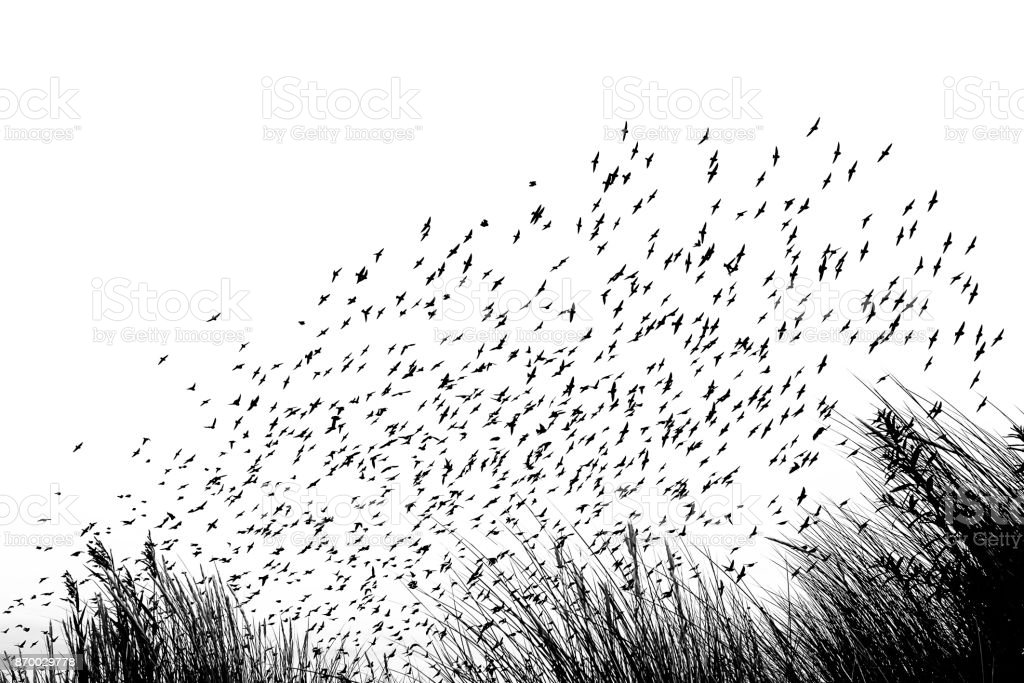 Bird migration stock photo
