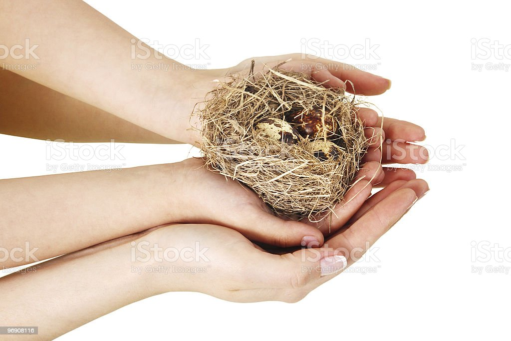 Bird nest in hands royalty-free stock photo