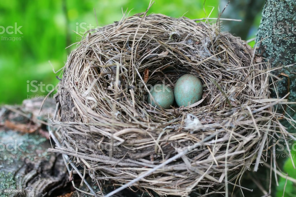 bird nest in nature stock photo