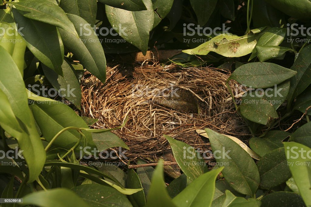 Bird Nest nestled among the leaves stock photo
