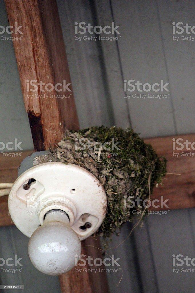 Bird Nest on a Light Fixture stock photo