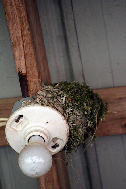 bird nest on a light fixture - pam schodt stock photos and pictures