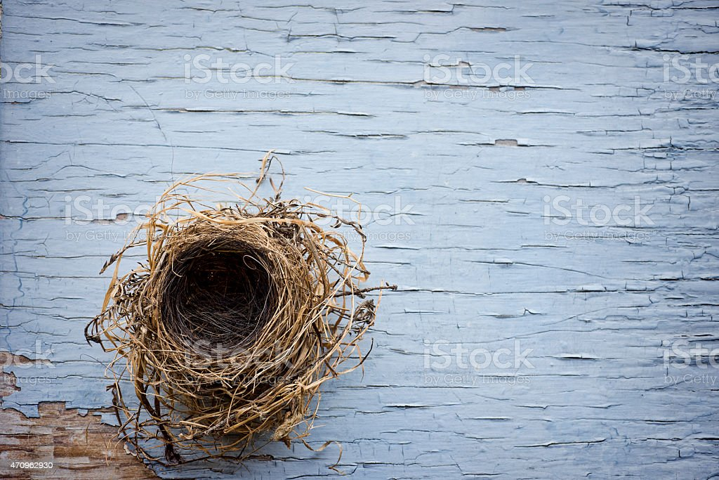 Bird nest on weathered wood stock photo