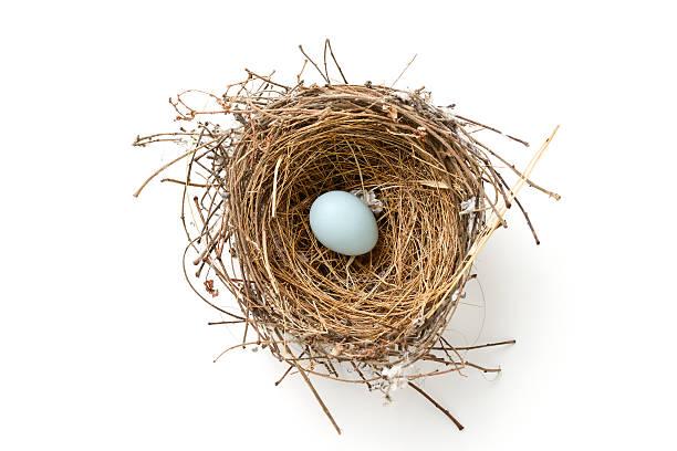 Bird nest picture id515919338?b=1&k=6&m=515919338&s=612x612&w=0&h= s2hnufveikuymgxcv gtvf7iurfzwmgc48y23hpf4y=