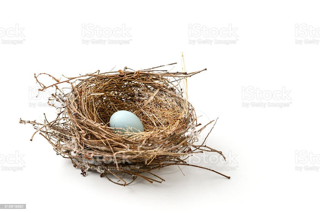 bird nest stock photo