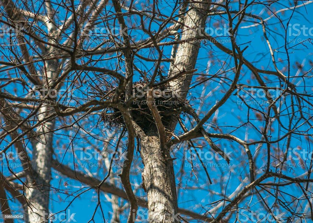 Le Nid d'Oiseau) photo libre de droits