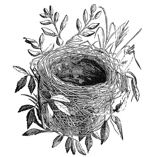 bird nest vintage illustration stock photo