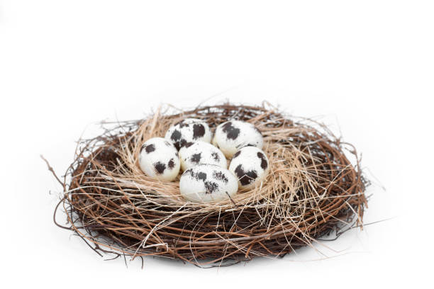 Bird nest with a group of 6 natural spotted eggs springtime concept stock photo
