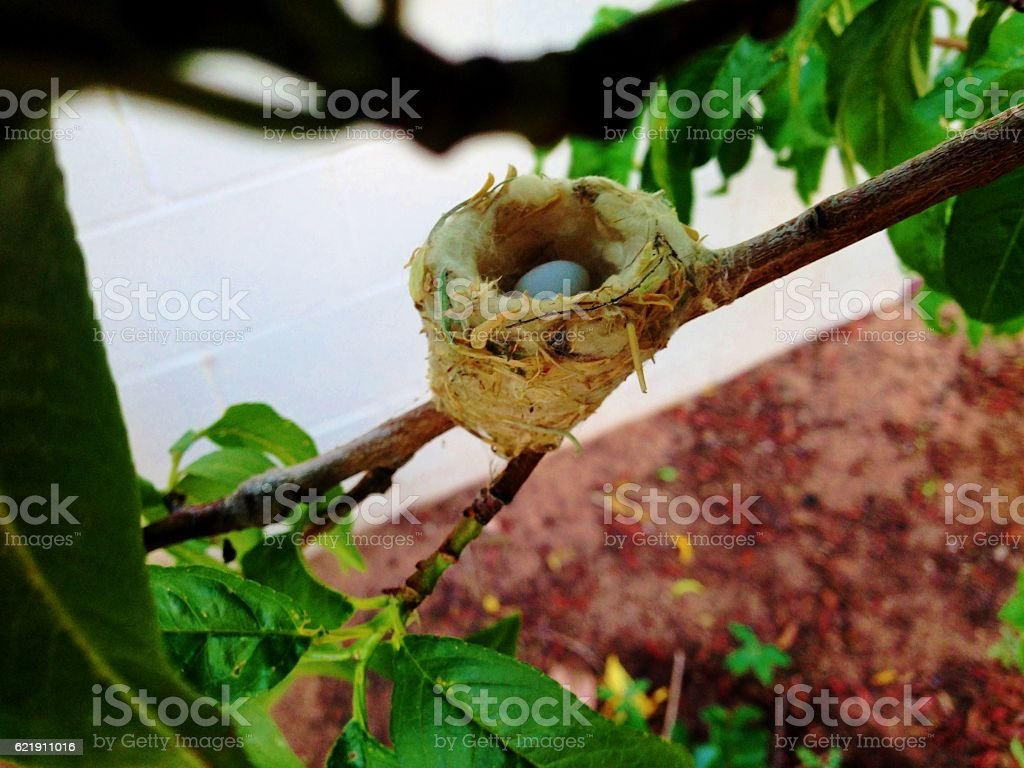 Bird Nest with Egg stock photo