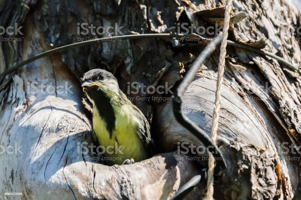 Close-up photography of the small bird nestling in the wild. Tree...