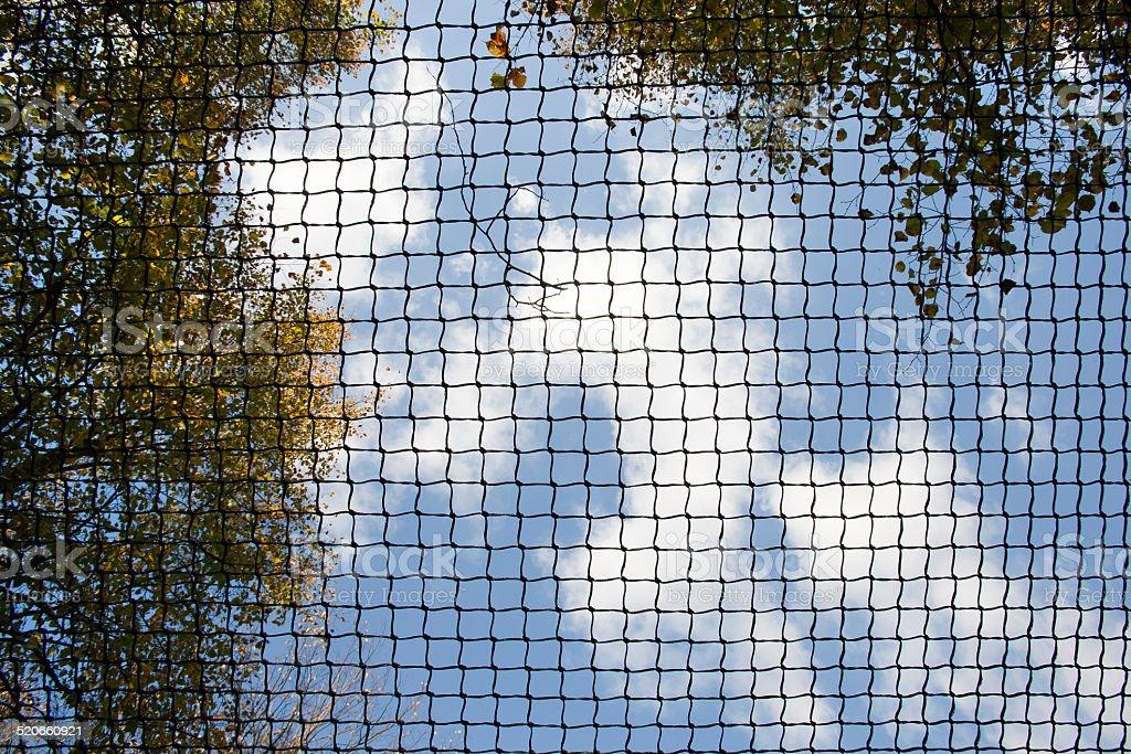 Bird net stock photo