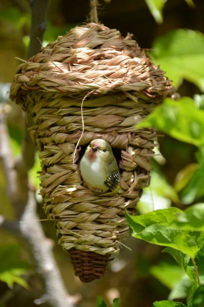 Pájaro de adorno - foto de stock