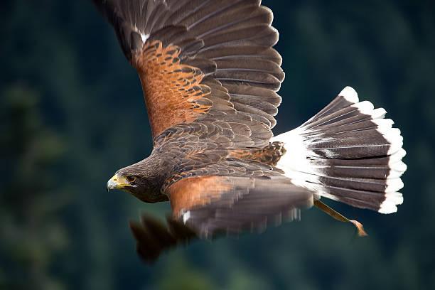 Vogel der Anmut – Foto
