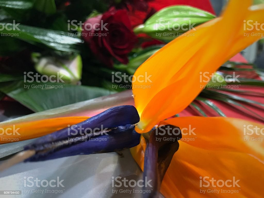 Bird of Paradise Flower in a bouquet stock photo