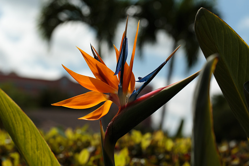 Bird Of Paradise Flower Silhouette Stock Photo - Download Image Now