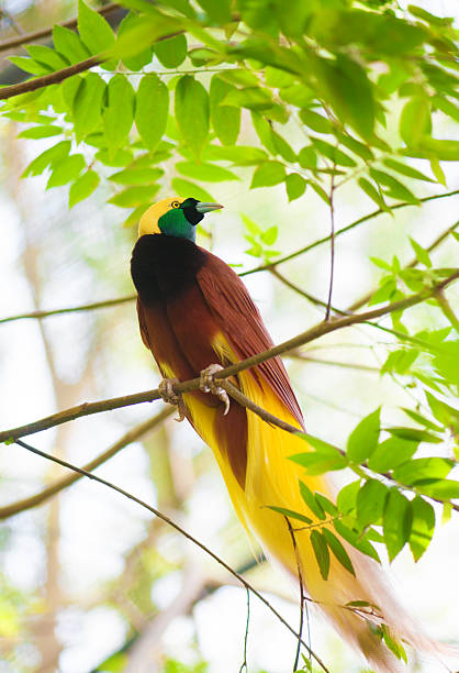 Bird of Paradise on a tree stock photo