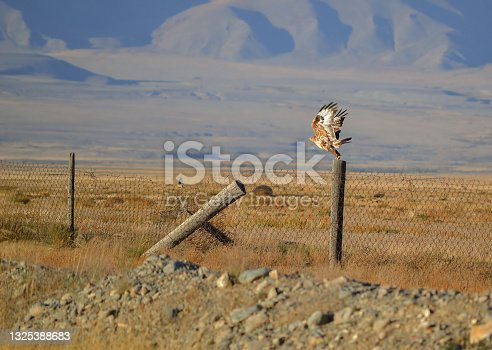 istock Bird of prey takes off from a fence 1325388683