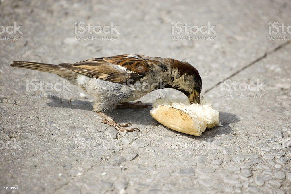 Bird of street royalty-free stock photo