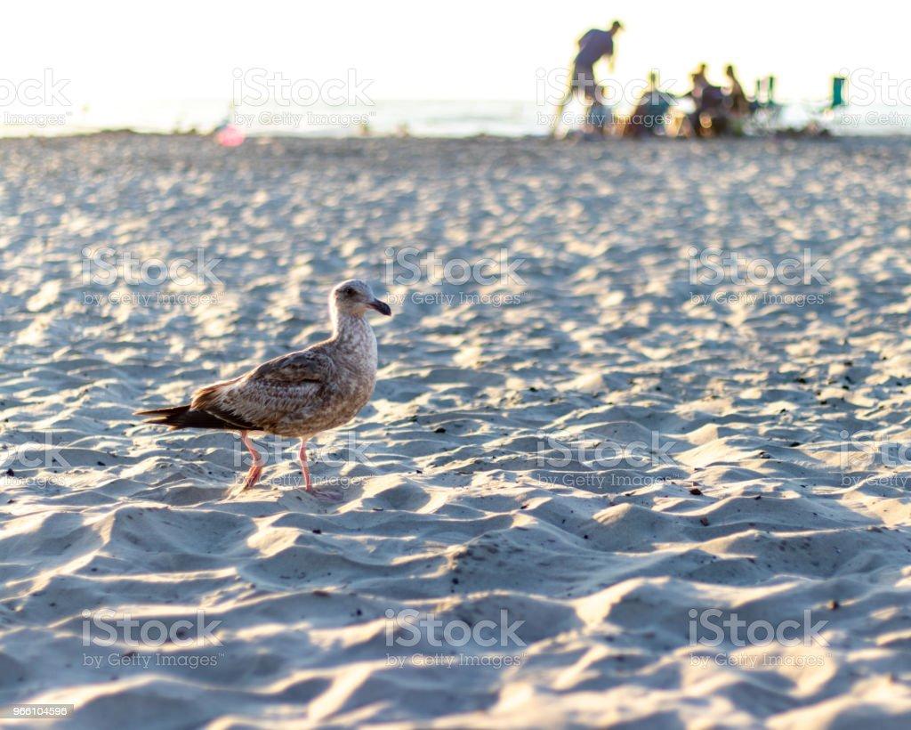 Vogel op een strand - Royalty-free Buitenopname Stockfoto