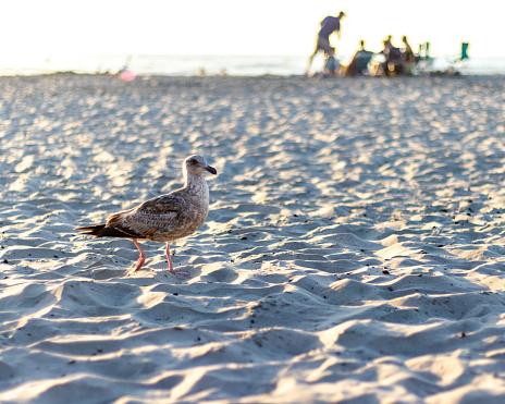 Vogel Op Een Strand Stockfoto en meer beelden van Buitenopname