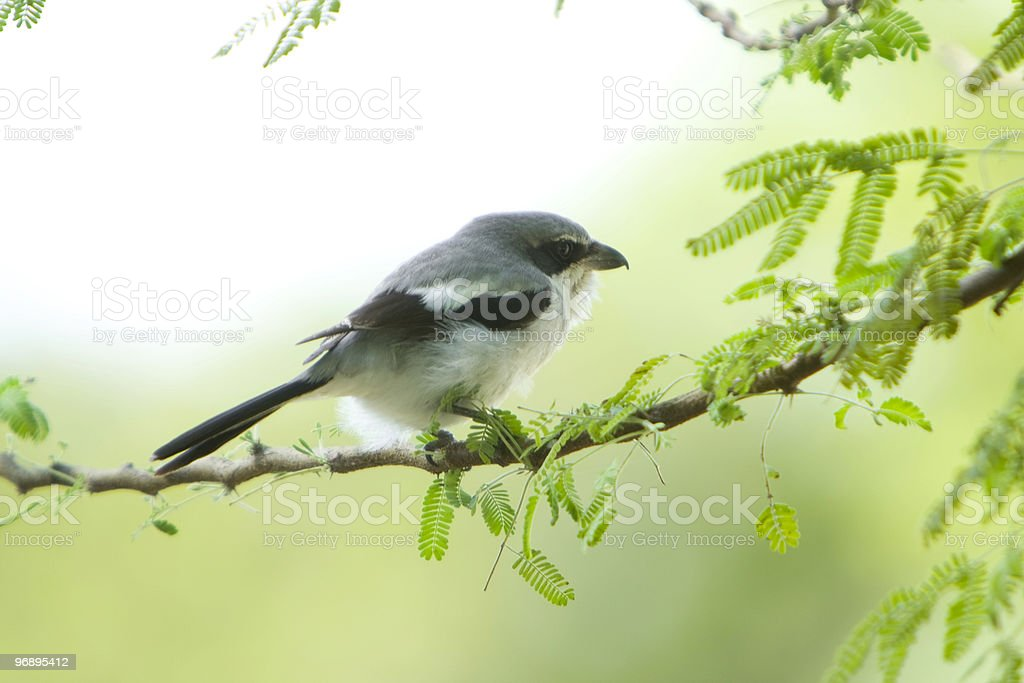 Bird on a branch royalty-free stock photo