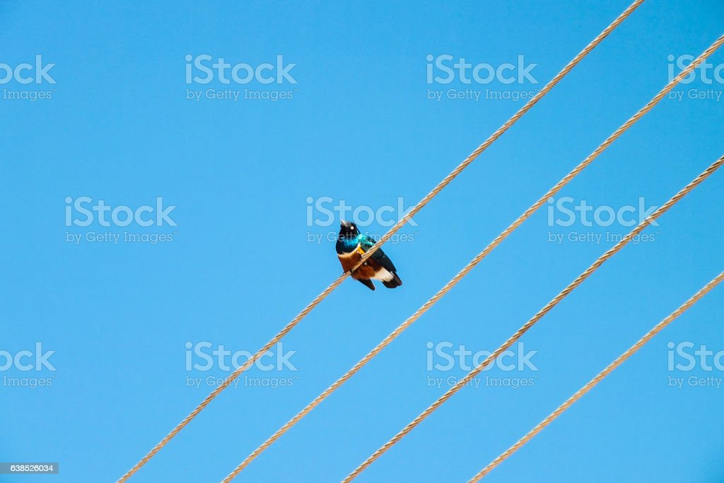 Bird on a cable stock photo
