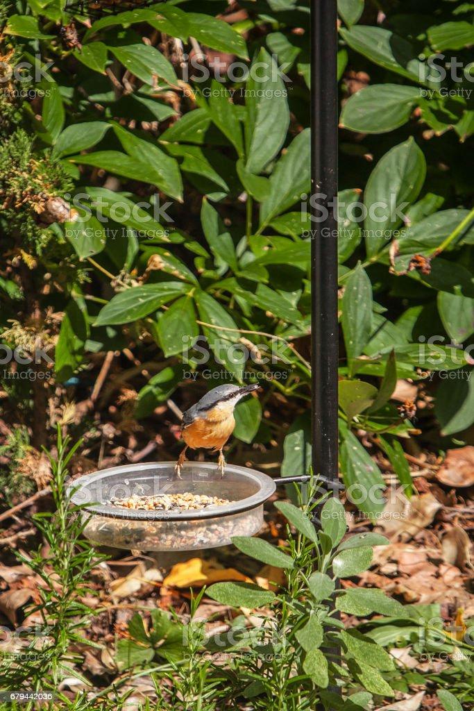 A bird on a feeder foto de stock royalty-free