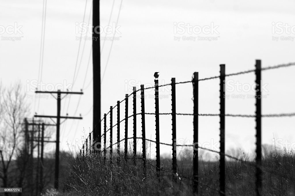 Bird On A Fence Post royalty-free stock photo