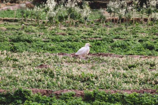 Vogel auf einem Feld – Foto