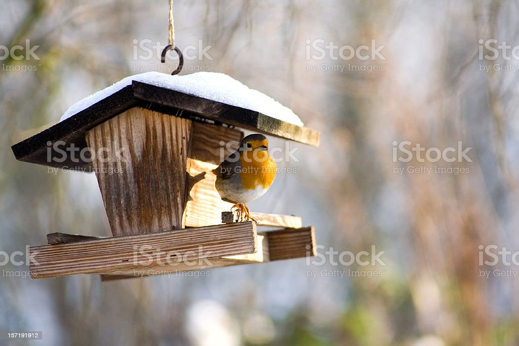 A bird on a hanging bird feeder stock photo