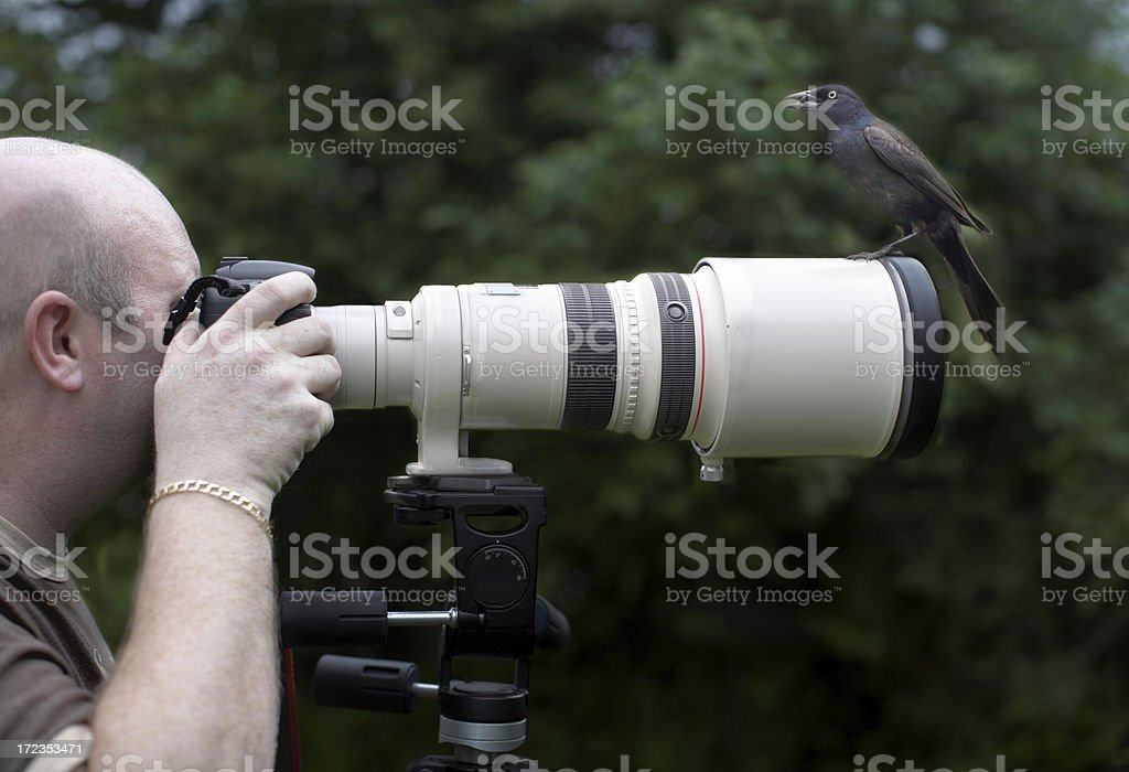 Bird on a lens stock photo