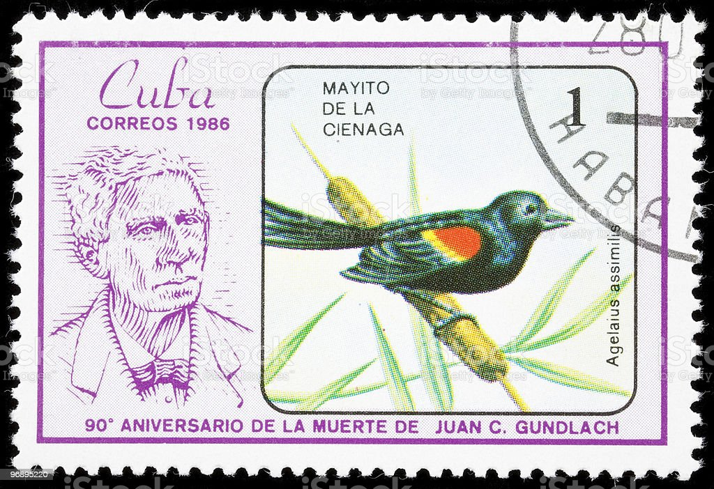 Bird on a postage stamp royalty-free stock photo