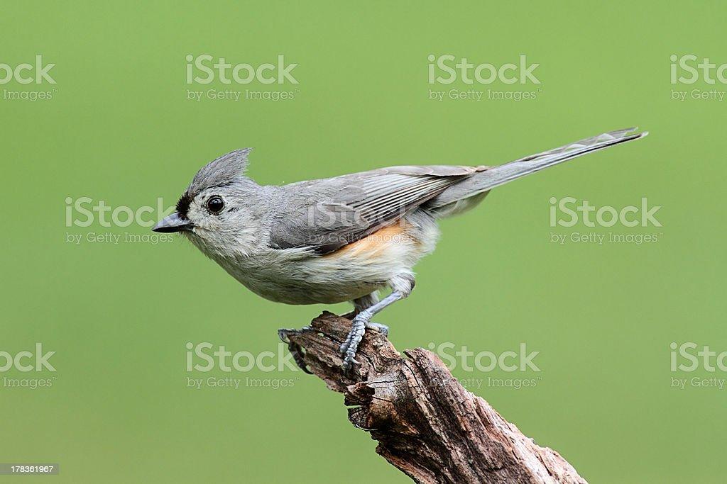 Bird On A Stick stock photo