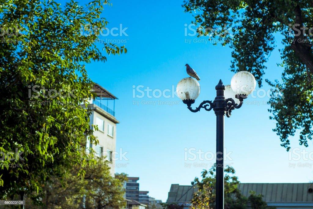 A bird on a street lamp stock photo