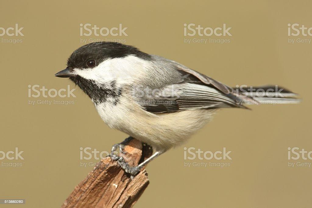 Bird On A Stump In Winter stock photo