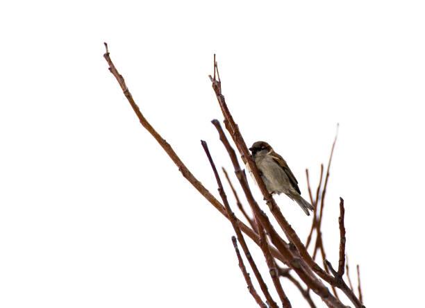 Vogel auf einem Ast im winter – Foto