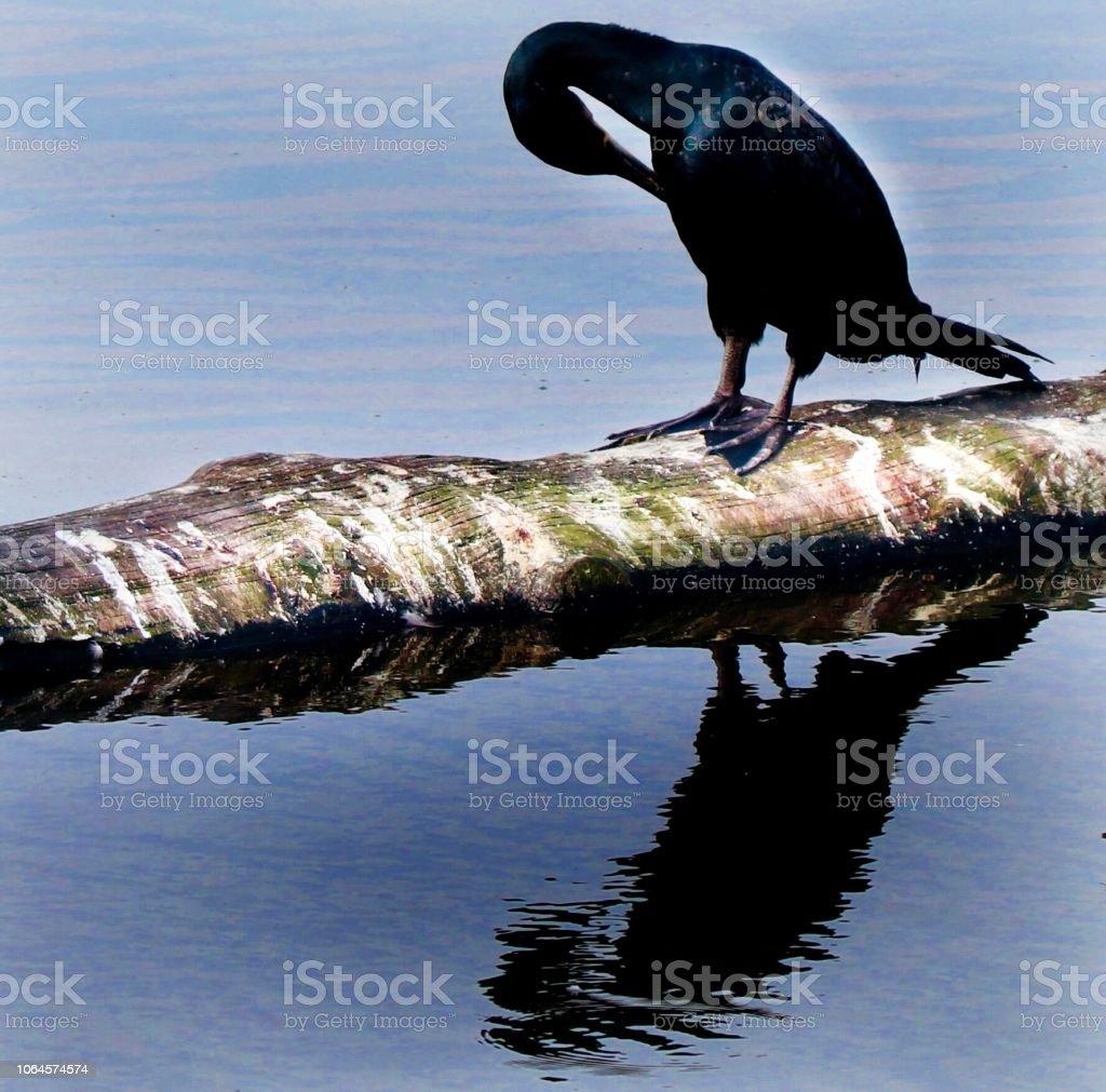 Bird on a tree trunk on the water stock photo