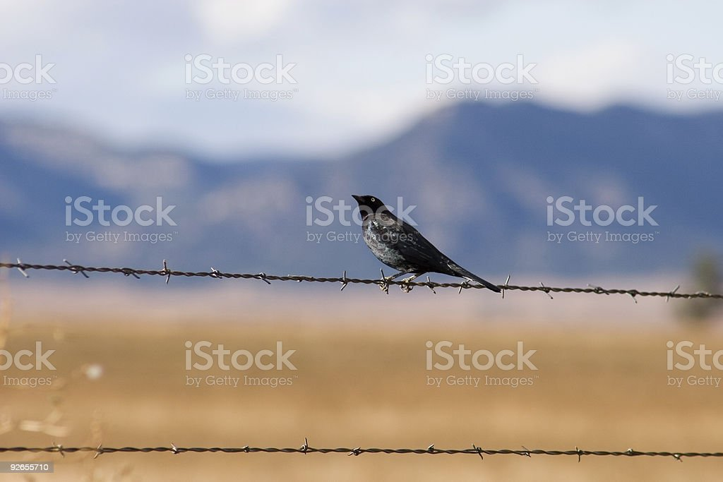 Bird on a wire 1 royalty-free stock photo