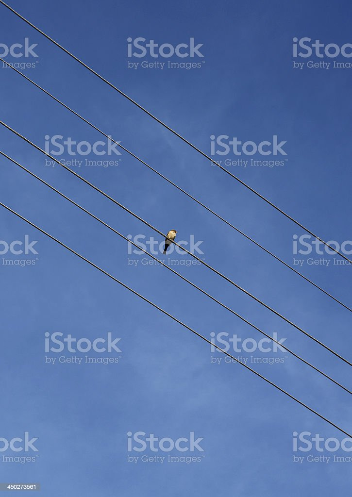 Bird on a Wire stock photo