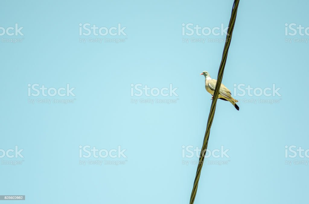 Bird on a wire with clear blue sky background. stock photo