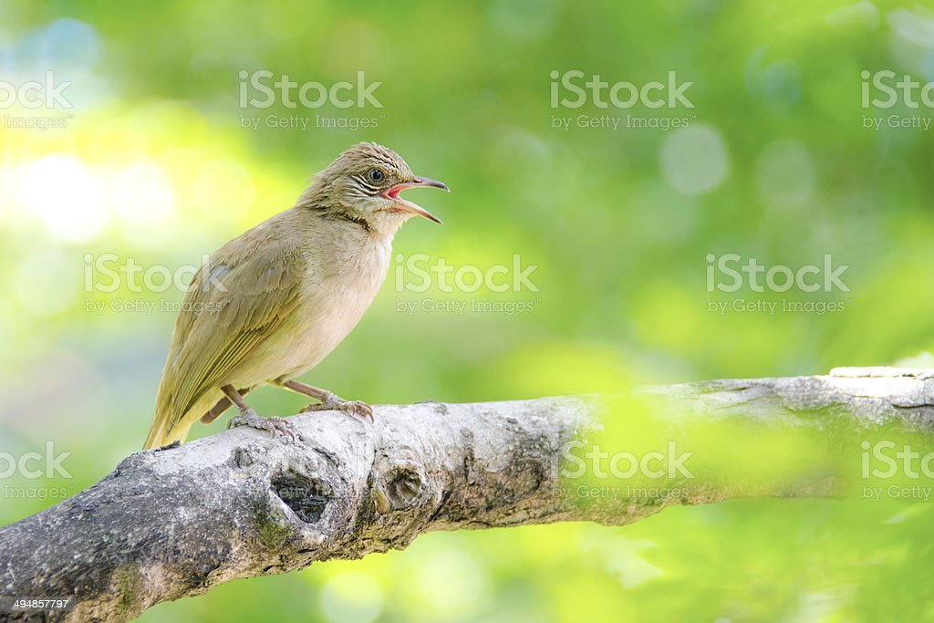 Bird on branches stock photo