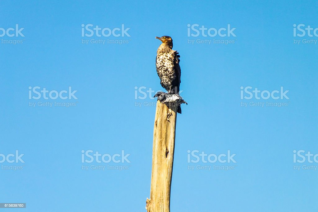 Bird on dry branch of dead tree stock photo