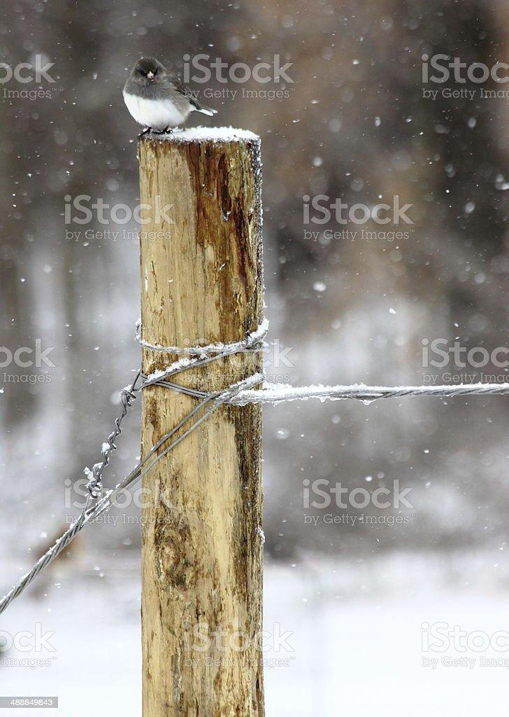 Bird on Fence Post in Winter Snow stock photo