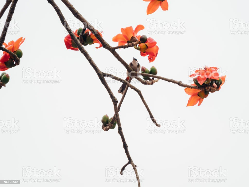 bird on kapok tree stock photo