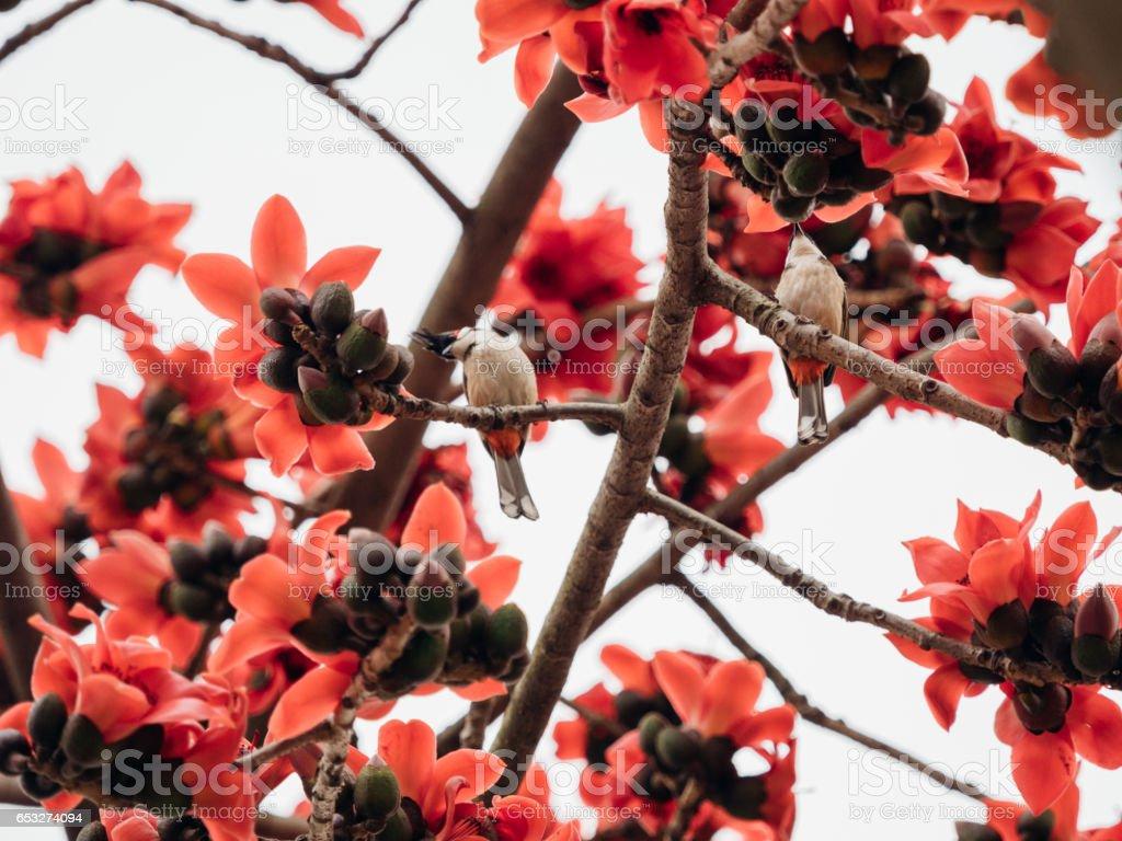 Bird On Kapok Tree Stock Photo - Download Image Now - iStock