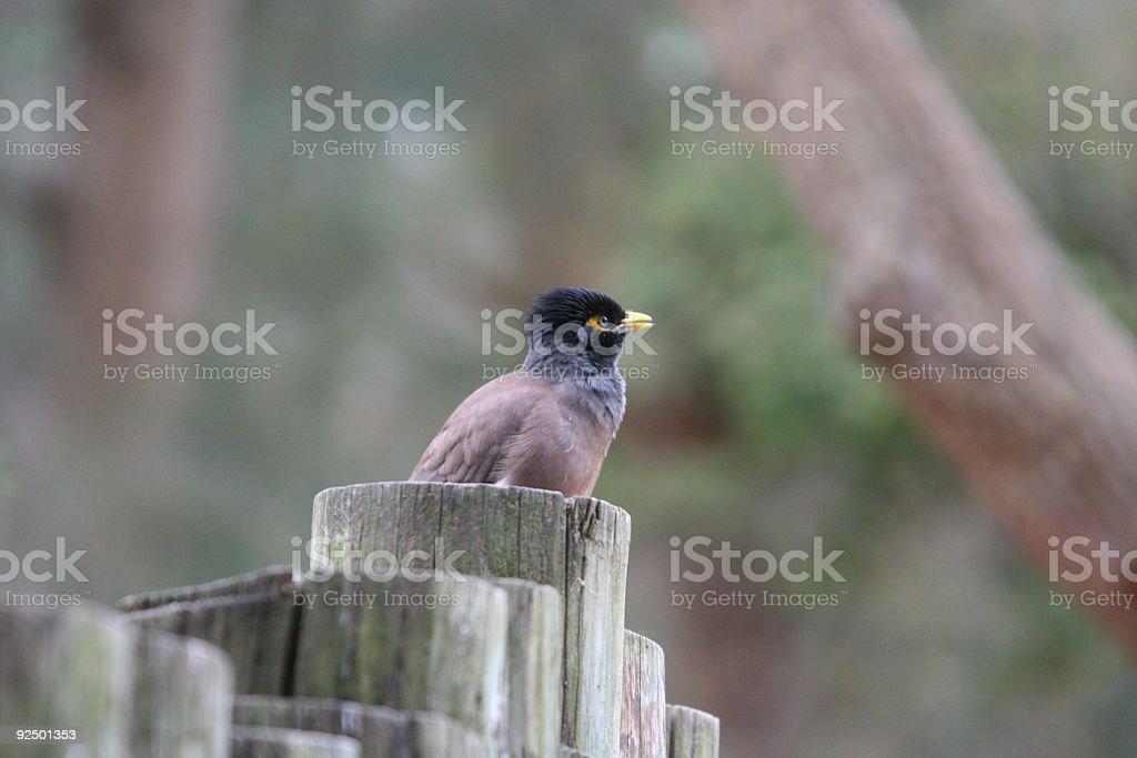 Bird on pole fence royalty-free stock photo