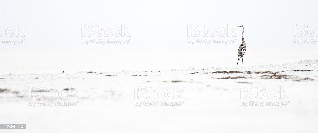 Bird on sandy beach royalty-free stock photo