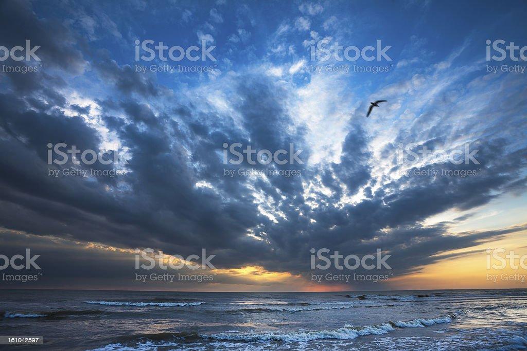 Bird on seashore stock photo