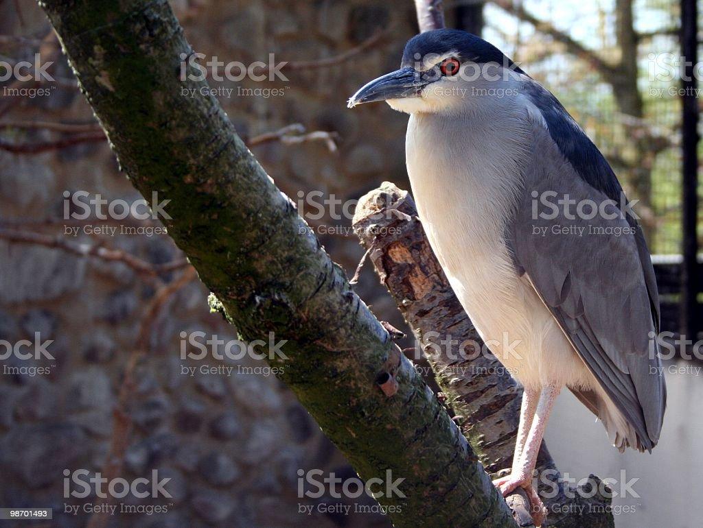 Bird on Stick royalty-free stock photo