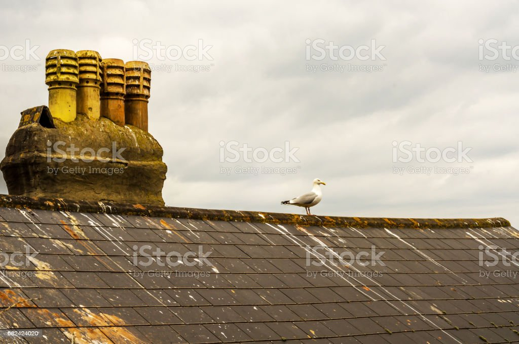 Bird on the chimney and roof of building covered with green moss, seaside spot seen from the bird's eye view, royalty-free stock photo